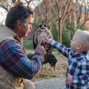 Hawk and Falconry Demonstrations - Eric Werner - Easter Shore Experience