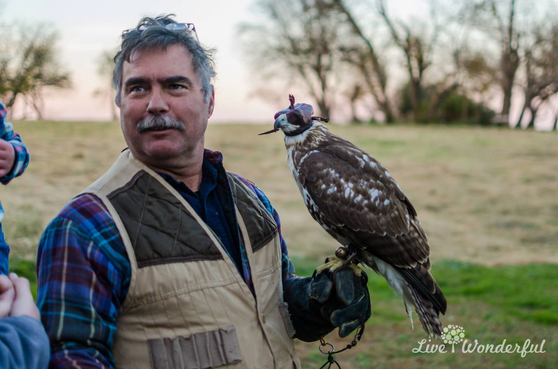 Falconry with Eric Werner of Eastern Shore Experience