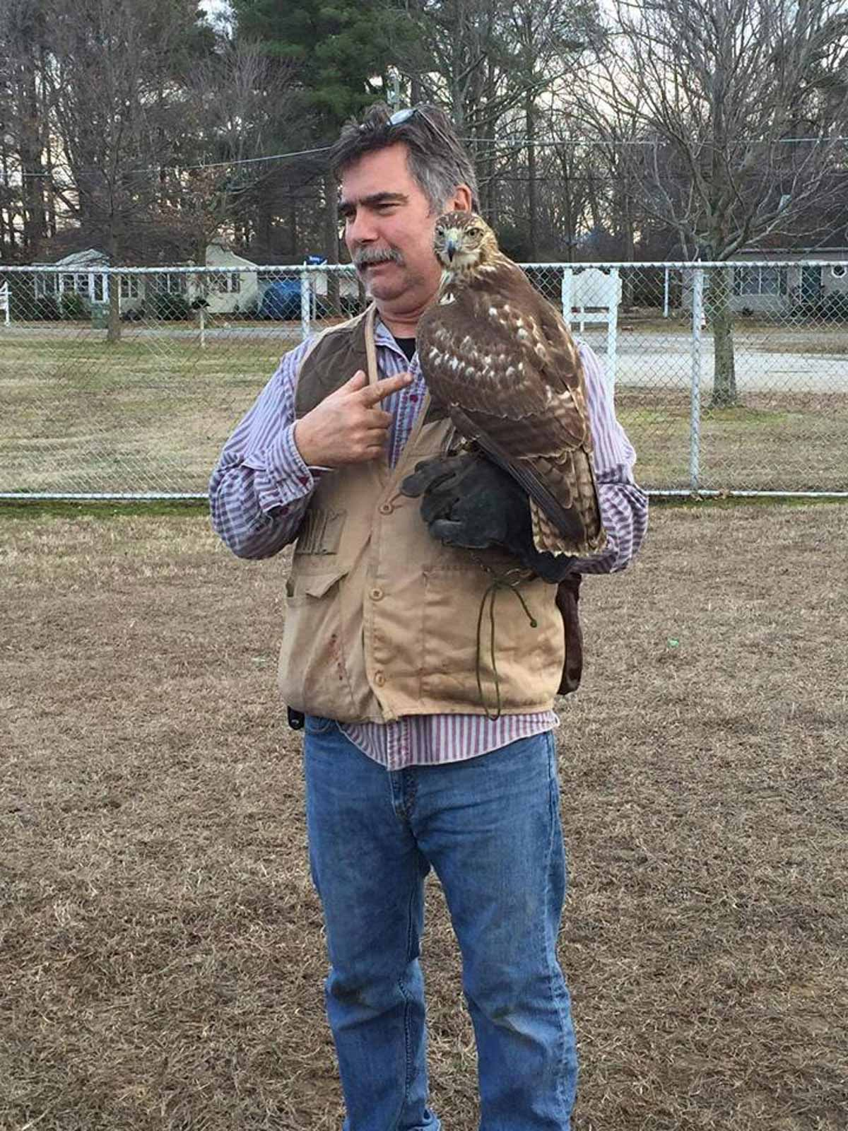 Sago The Red Tail Hawk - Eastern Shore Experience