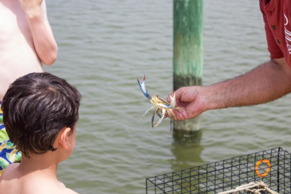 Dockside Discoveries Backyard Adventures Eastern Shore Experience